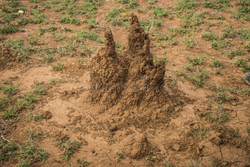 Monticule de la terre cimentée qui est maison du petit, pâle insecte doux-bodied qui vit dans de grandes colonies, Kenya images stock