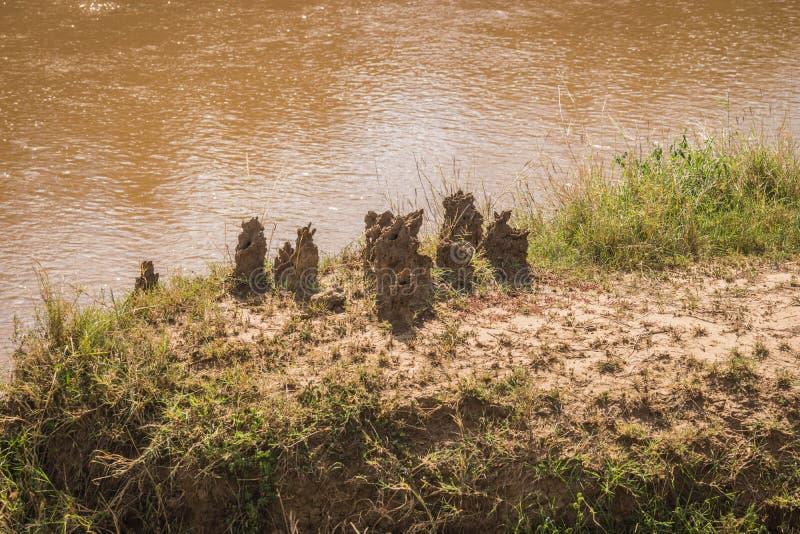 Monticule de la terre cimentée qui est maison du petit, pâle insecte doux-bodied qui vit dans de grandes colonies, Kenya photographie stock