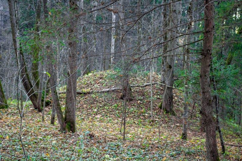Monticule de parc dans la forêt de chaux photographie stock
