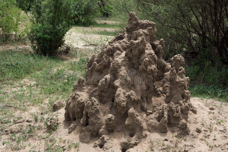 Monticule de termite en parc national de Serengeti image libre de droits