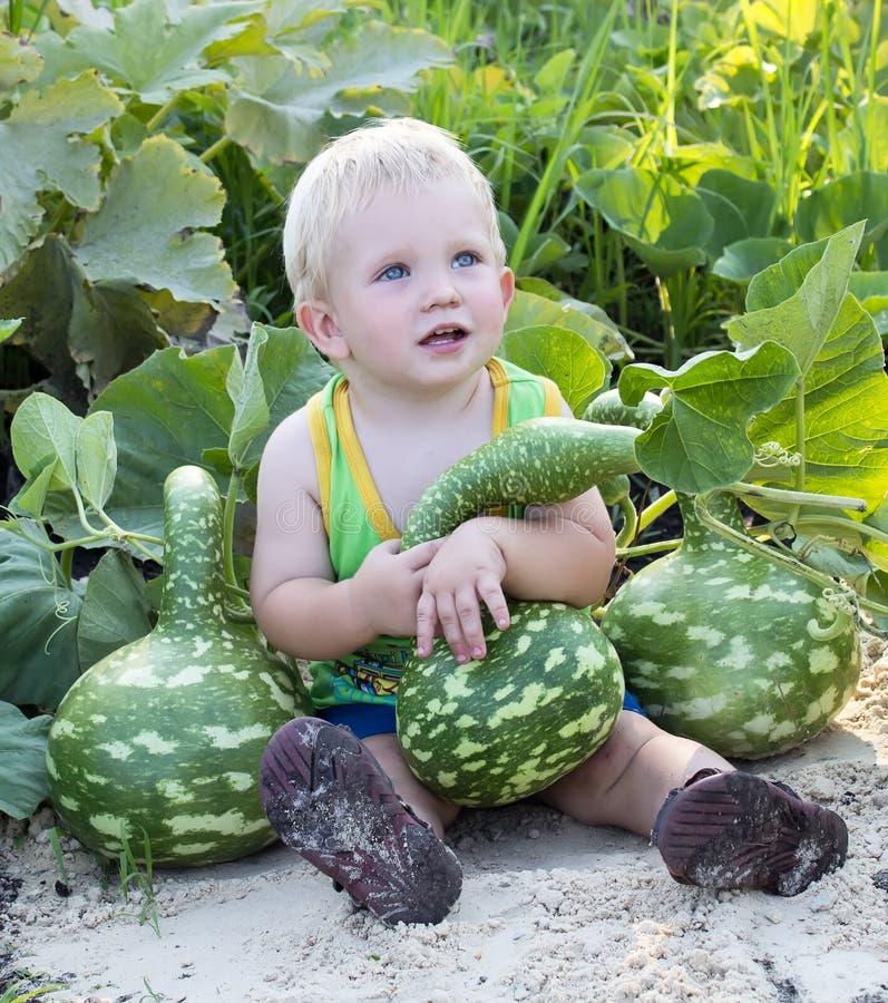Montieren Sie die Ernte stockfotos