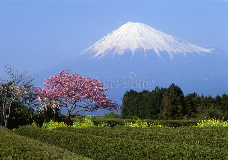Montierung Fuji I lizenzfreie stockfotos