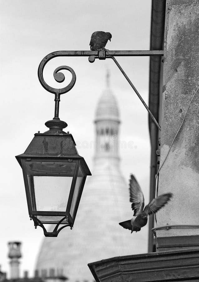 montmartre περιστέρια στοκ φωτογραφία