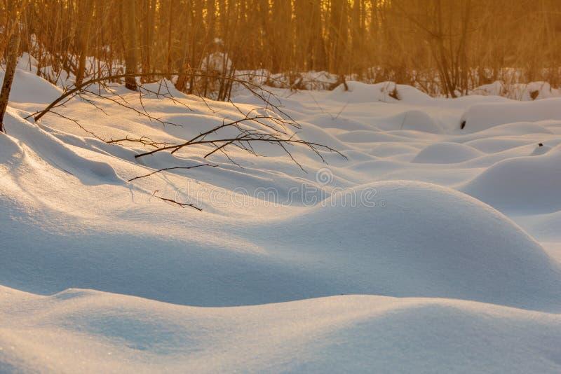 Montones de la nieve Dunas eróticas de la nieve en el bosque nevoso ucraniano que iguala con la luz caliente suave de la puesta d foto de archivo libre de regalías