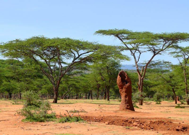 Montones etíopes de la termita en el bosque. Naturaleza del paisaje. África imágenes de archivo libres de regalías
