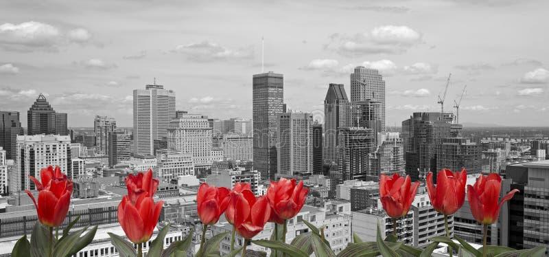 Montréal noir et blanc photos stock
