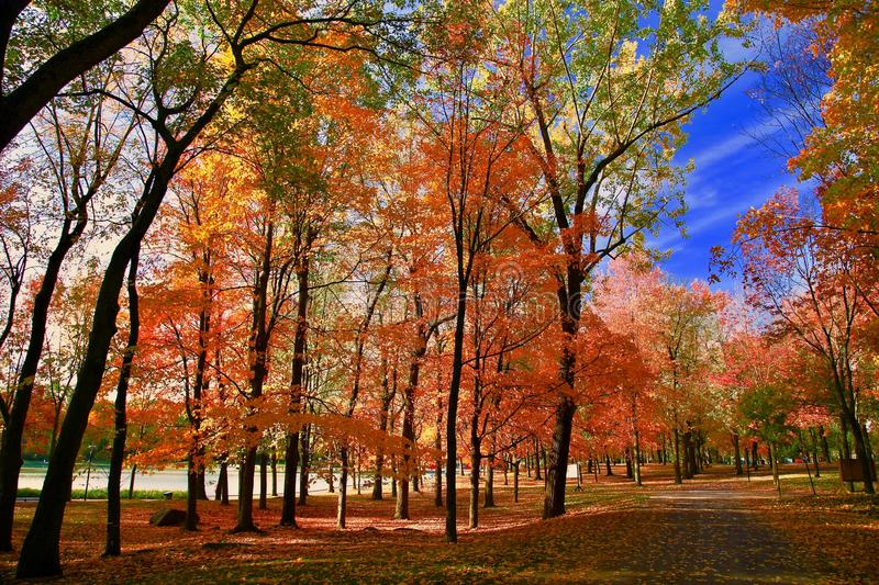 Montreal, Autumn, Quebec Canada. Autumn in Montreal Quebec Canada. flower, lake and maple leaf stock photos