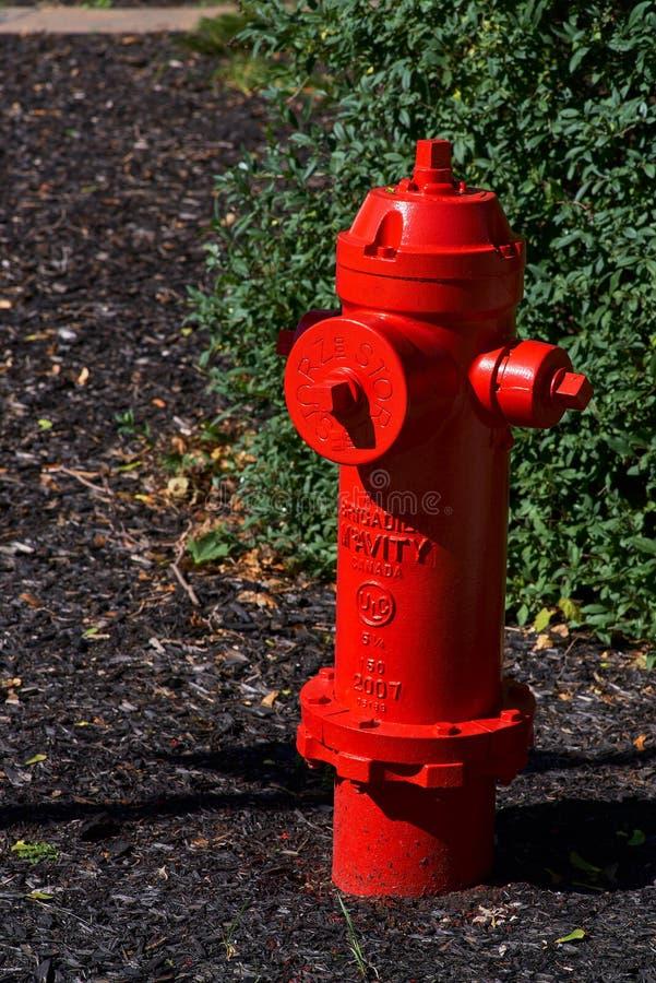 Montreal, Quebec, Kanada, am 27. September 2018: Roter Hydrant im Schmutz und in den Unkräutern lizenzfreies stockfoto