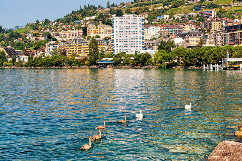 Montreux-Stadtlandschaft und -schwäne auf Geneva See-Schweizern Riviera lizenzfreies stockbild