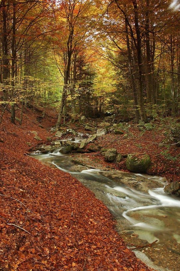 montseny ποταμός στοκ εικόνες