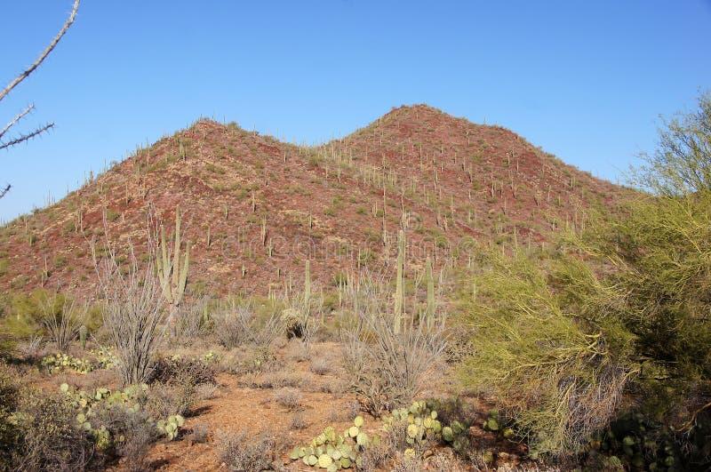 Monument national de cactus de tuyau d'organe, Arizona, Etats-Unis images libres de droits