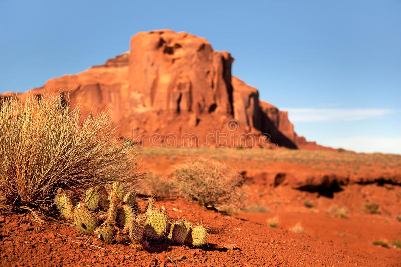 Monument Valley Cactus. Prickly pear cactus and indigenous plants growing in the desert. Monument Valley, Utah, USA. Intentional shallow depth of field royalty free stock photography