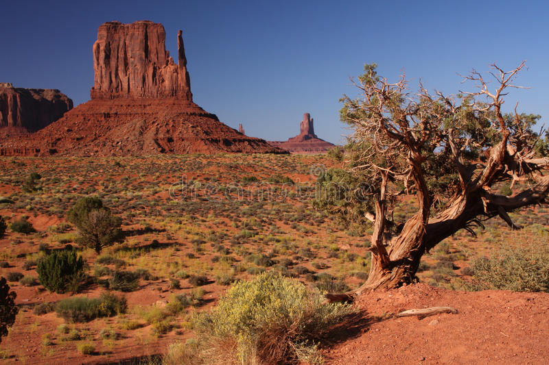 Download Monument valley tree stock image. Image of eroded, deserted - 16831083