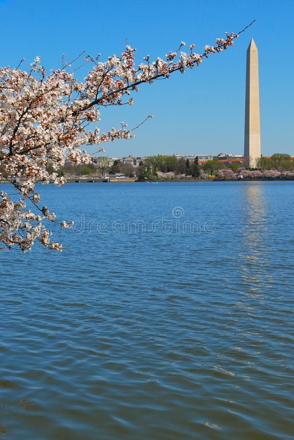 Monument of Washington DC. During the cherry blossom 2010 stock photography