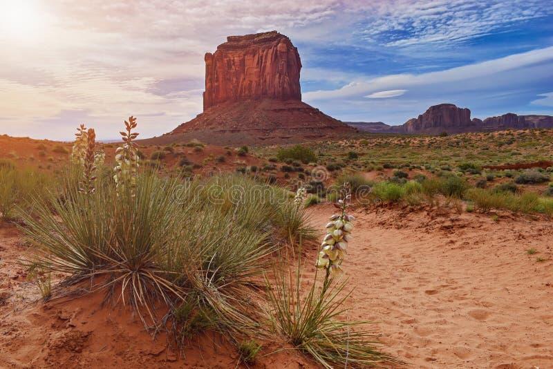 Monumentdalen, den stam- navajoen parkerar, det berömda ökenlandskapet, USA - vår och blommapalmliljor arkivfoto