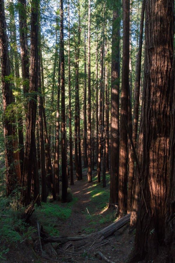 Monumento de Muir Woods National fotos de archivo libres de regalías