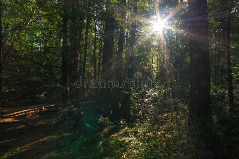 Monumento de Muir Woods National fotografía de archivo