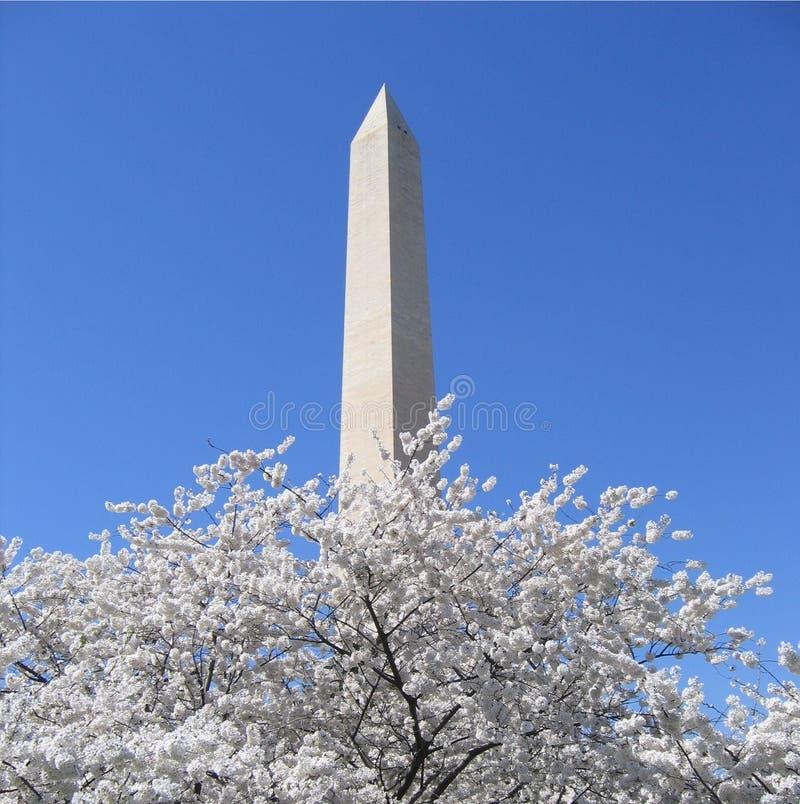 Monumento di Washington con i fiori di ciliegia fotografia stock libera da diritti
