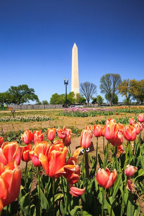 Monumento do Washington DC com tulipas foto de stock royalty free