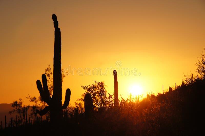 Monumento nacional del cactus del tubo de órgano, Arizona, los E.E.U.U. foto de archivo libre de regalías