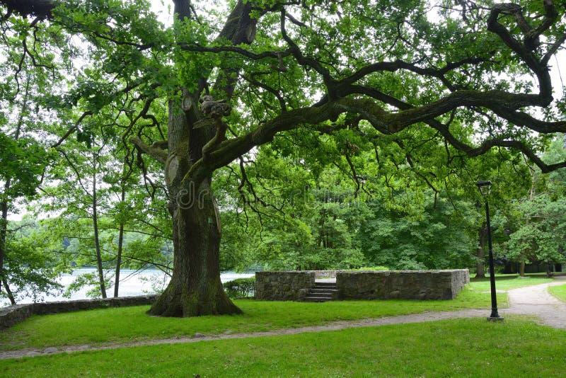 Monuments, parcs, lacs, perle Lubusz Lagow photo libre de droits