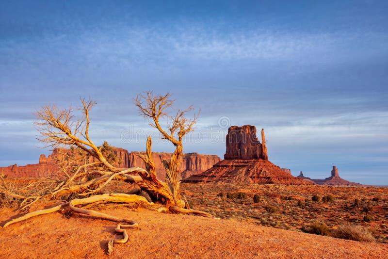 Monumenttal-Landschaftsansicht mit trockenem Baum und drastischem Himmel, Arizona stockfotos