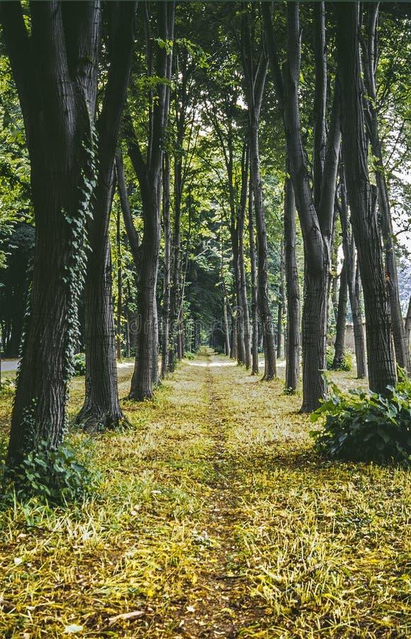 Download Monza Park stock image. Image of tree, milan, woods, path - 27060497
