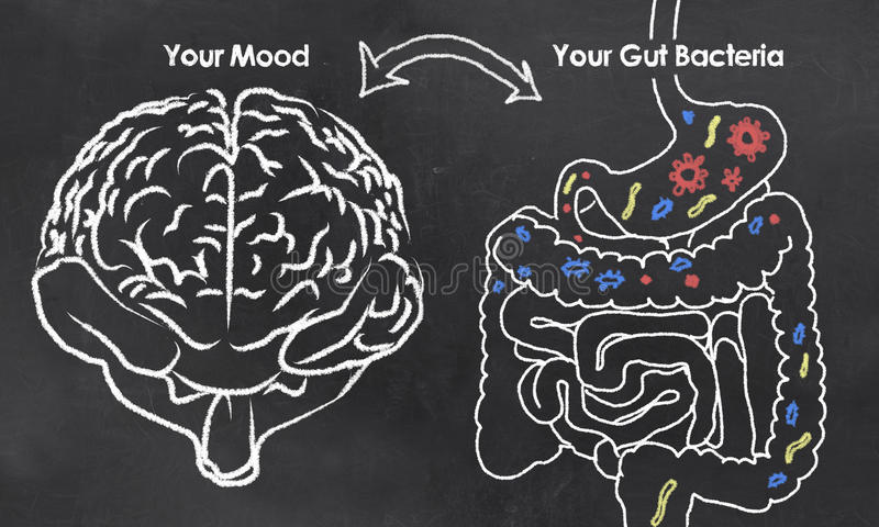 Mood and Gut Bacteria. With chalk on Blackboard
