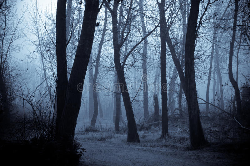 Mood Shadows in the Dark Misty Forest stock image