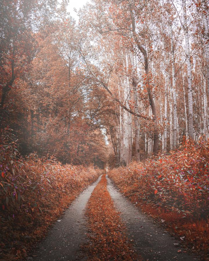 Moody autumn road in forest, fall wallpaper. Moody autumn road in the forest. Fall wallpaper with orange colors. Bright scenery light in the background stock photo
