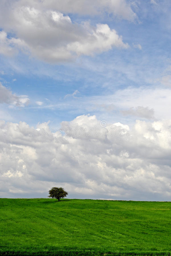 Moody/drömlikt träd royaltyfri bild