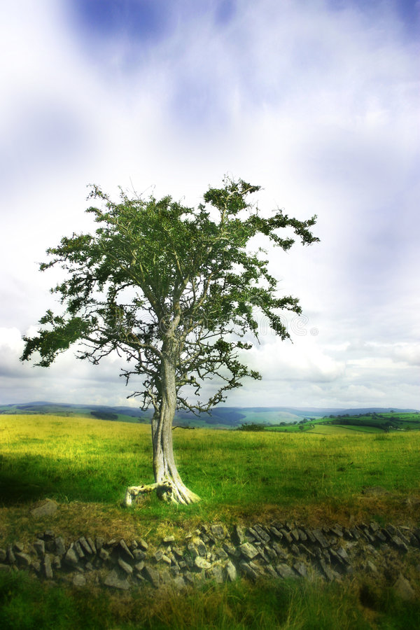 Moody/ dreamy tree. Moody tree. This photo has a dreamy effect to the foreground and background. The tree is in sharp focus. Light is on the hills and on the royalty free stock image