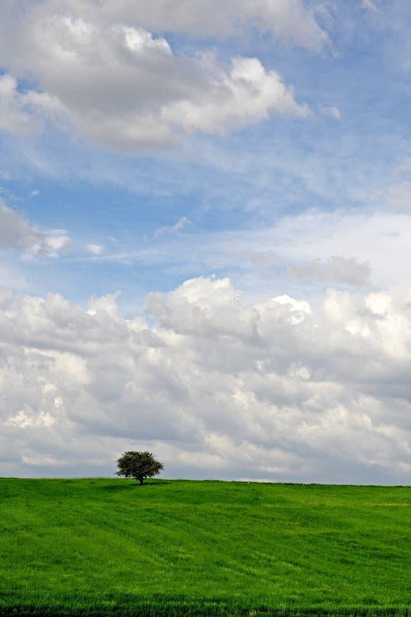Moody/ dreamy tree royalty free stock image