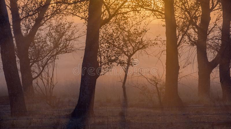 Moody dusk landscape with  dry trees in landscape format. Moody sunset landscape with a low sun and silhouetted trees image in landscape format with copy space stock image