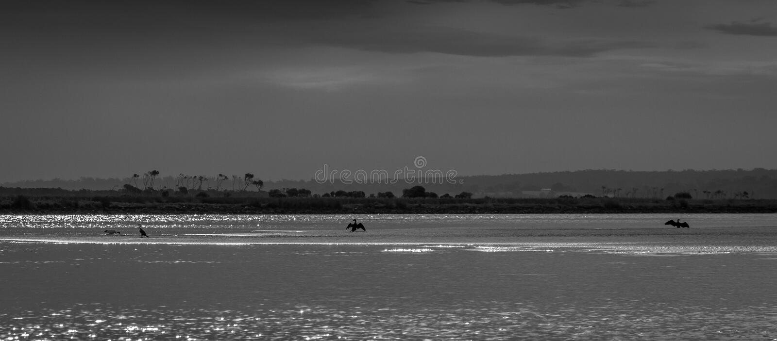 Moody estuary black and white image with birds stock photography