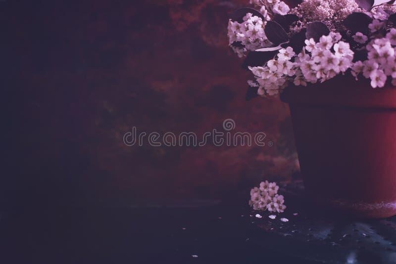 Moody Floral dark background. Mystical Deep red purple flower on black background. Backdrop, melancholic, tone, carnation, blurred, decorative, winter, above stock images
