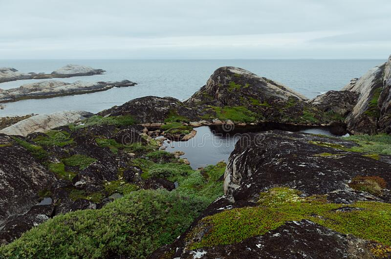 Moody grey arctic coast with sea view - slope of granite shore with smooth rocks  and lush green meadow, Barents Sea in haze. Moody grey arctic coast with sea stock image