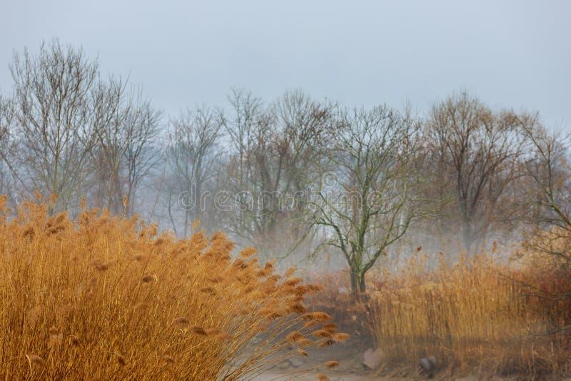 Moody grey seasonal background - trees in fog, rainy foggy day, raindrops stock image