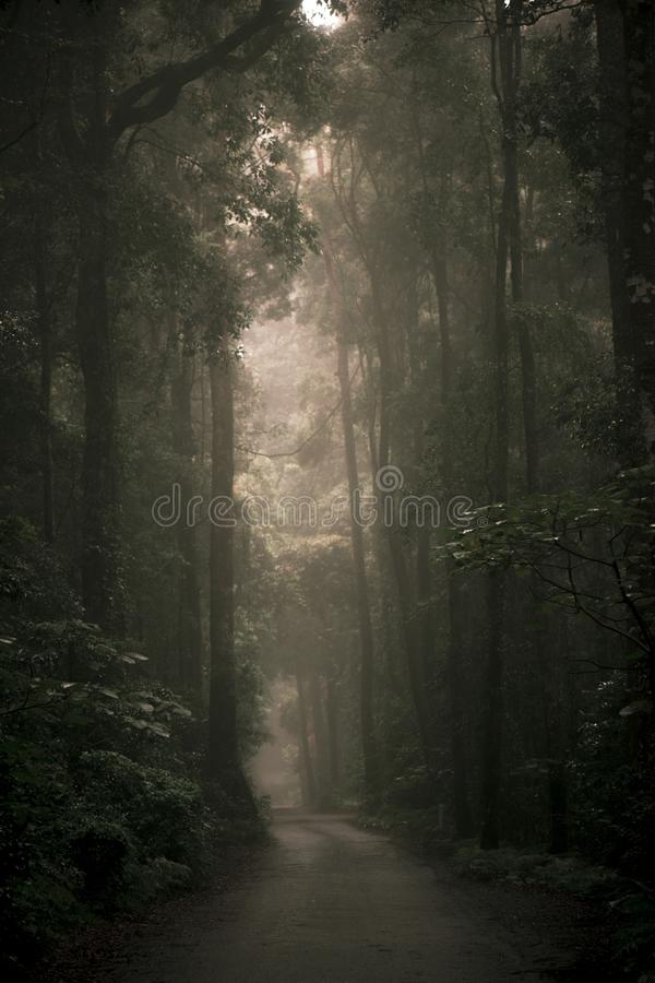 Moody hazy road in the forest. Moody hazy road scene in an overgrown forest stock photo