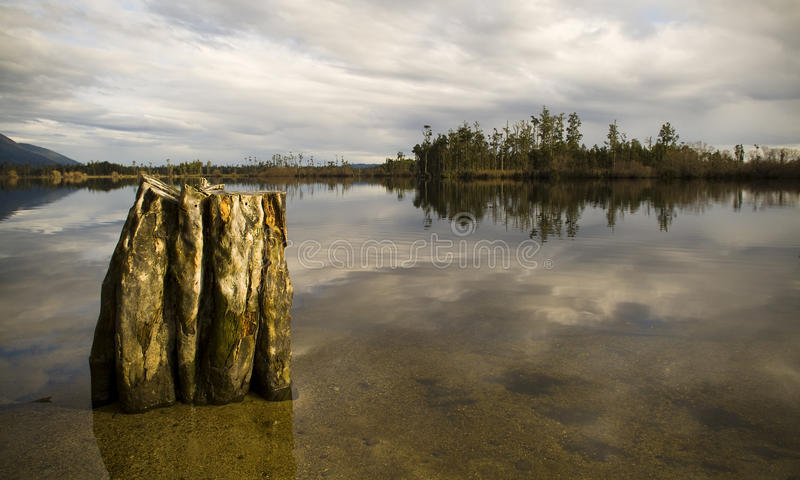 Moody Lake. Still reflective waters with old tree stump and forest island royalty free stock photos