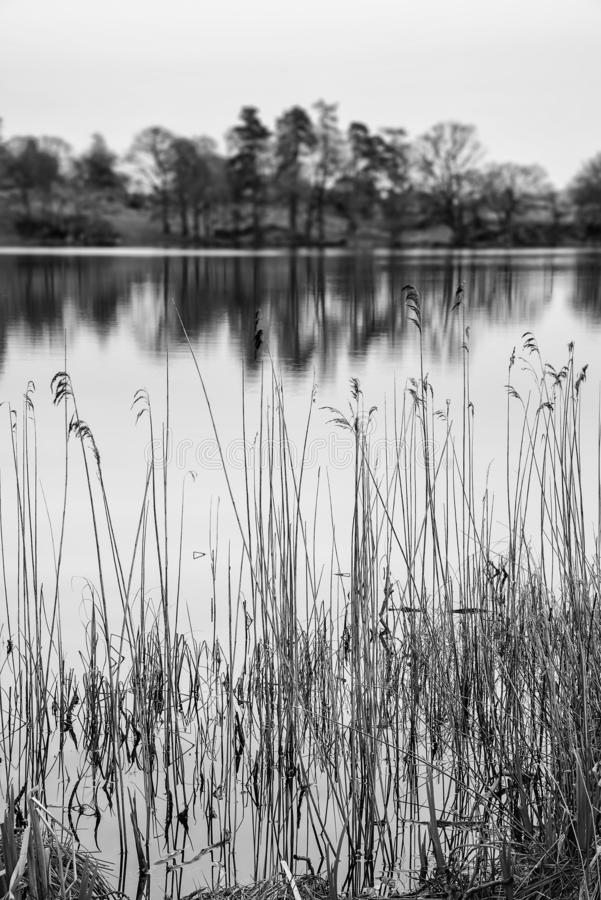 Moody landscape image of Loughrigg Tarn in UK Lake District during dramatic evening in Spring in black and white. Beautiful landscape image of Loughrigg Tarn in royalty free stock image