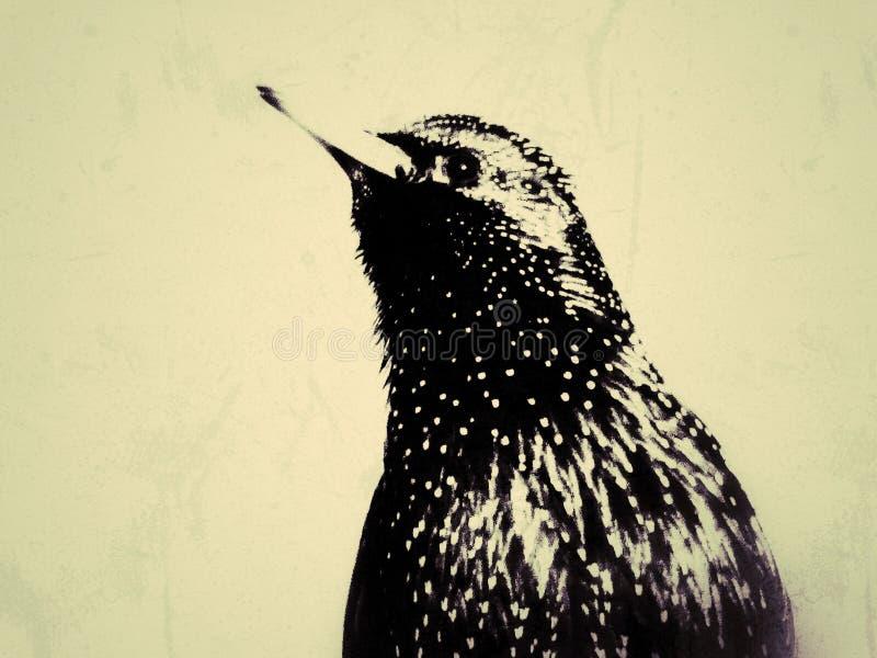 Starling 2 stock image