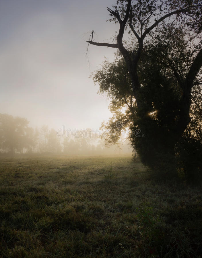 Moody Rural Sunrise With Mist And Dew On Grass royalty free stock photo