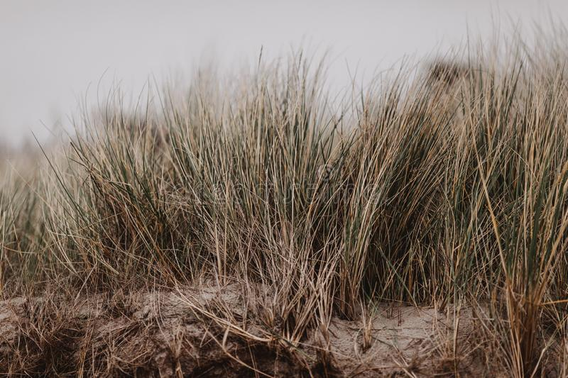 Moody and stormy day at the baltic sea royalty free stock image