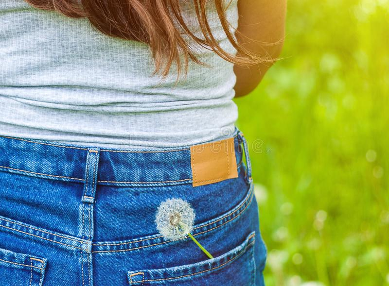 Moody summer picture of a dandelion flower in a jeans pocket on green background royalty free stock image