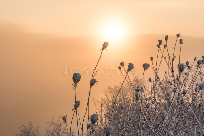Sunrise in the nature. Moody sunrise in winter fog in a white snowy landscape - Trees in a row side by side stock photo