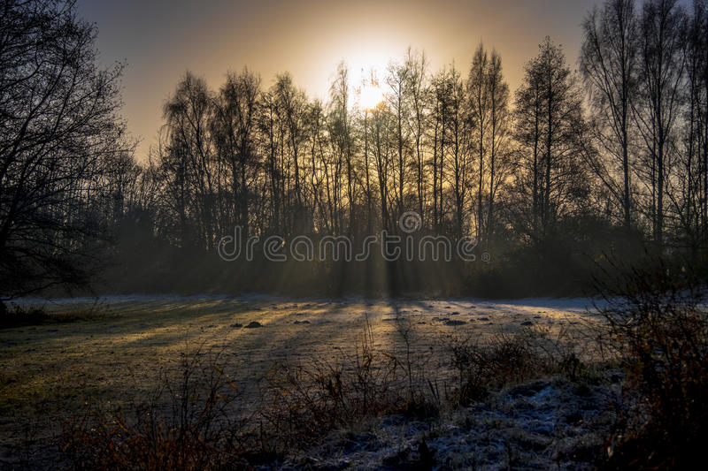 Moody trees sunset, Shafts of SunlightRays and bursting sunligh royalty free stock photography