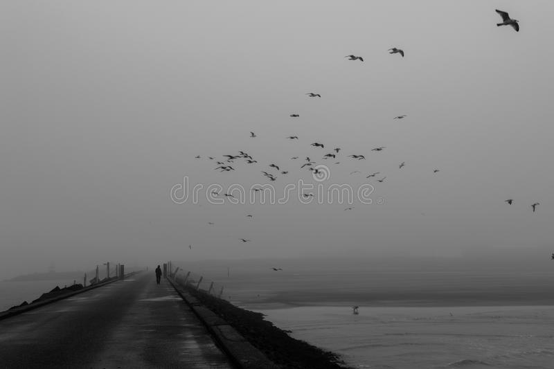 Download Moody walk on the pier stock image. Image of white, black - 65571211