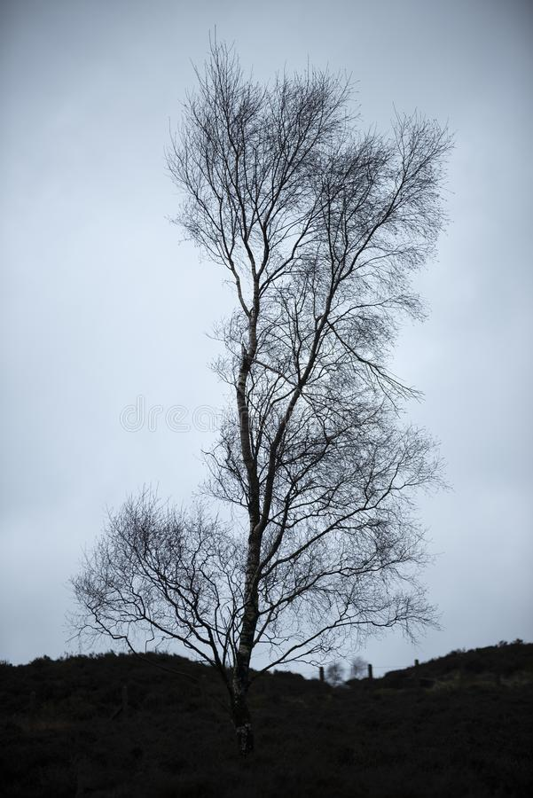 Moody Winter landscape image of skeletal trees in Peak District in England against dramatic dark sky. Beautiful moody Winter landscape image of skeletal trees in royalty free stock photos