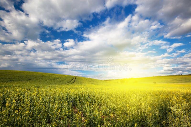 Mooi aard zonnig landschap stock foto